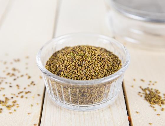Graines d'alfalfa bio