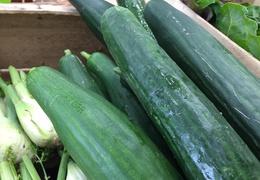 Concombre bio & local