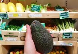 Avocats bio