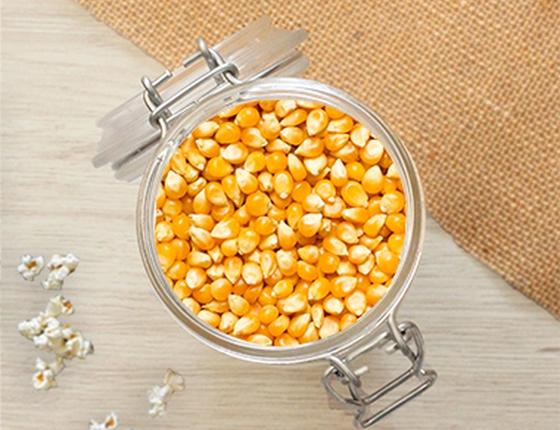 Maïs à pop-corn bio