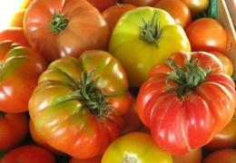 Tomates bio & locales