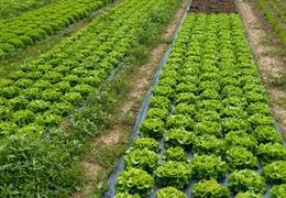 Salades bio & locales