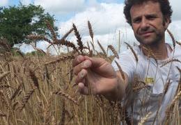 Baguette nature bio & locale