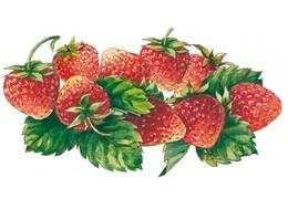 Sirop de fraise bio