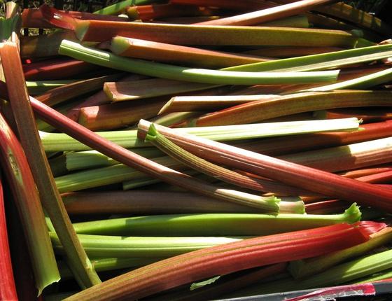 Rhubarbe bio & locale